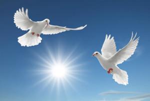 golubi