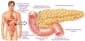 podjeludochnaya1